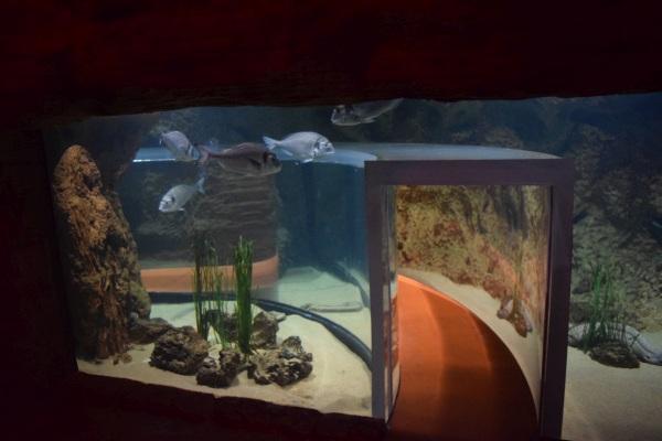 Aquarium national Malta, akvárium a atrakcie