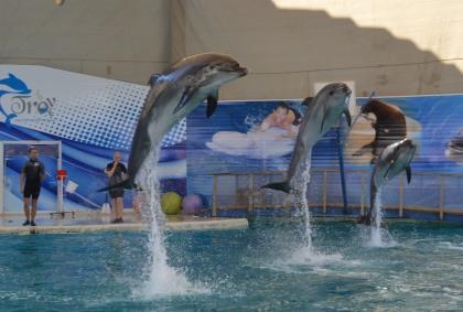 Delfinárium Turecko Belek, Troy
