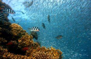 Sharm el Sheikh a potápanie