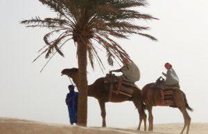 tunisko ilustračná fotografia ťavy