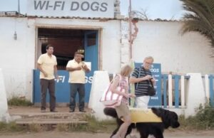 WI-FI Dogs služba