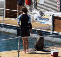 Fuerteventura Caleta de Fuste oceanarium tulene